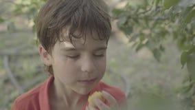 Τα δάκρυα αγοριών από το βερίκοκο από το δέντρο διακλαδίζονται και το τρώνε με την ευχαρίστηση απόθεμα βίντεο