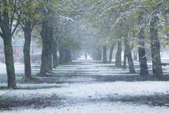 Τα δέντρα άνοιξη στο χιόνι, χιόνι μπορούν μέσα στοκ εικόνες