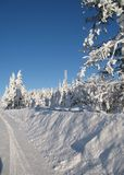 τα δέντρα ακρών Στοκ εικόνες με δικαίωμα ελεύθερης χρήσης