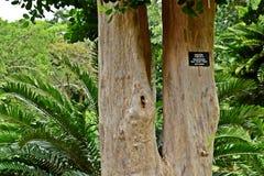 Τα δέντρα αφθονούν στοκ φωτογραφία με δικαίωμα ελεύθερης χρήσης