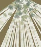 Τα δέντρα διαπερνούν τον ουρανό Στοκ φωτογραφία με δικαίωμα ελεύθερης χρήσης