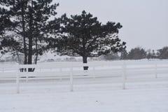 Τα δέντρα και ο στύλος περιφράζουν μέσα το χειμώνα Στοκ Εικόνα