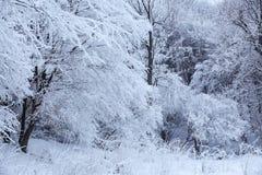 Τα δέντρα καλύπτονται με το χνουδωτό χιόνι Όμορφο τοπίο χειμερινών νεράιδων Η χλόη snowdrifts που καλύπτονται με τον παγετό Στοκ Φωτογραφία