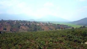 Τα δέντρα καφέ αυξάνονται στο λόφο βουνών ενάντια στην απόμακρη πόλη φιλμ μικρού μήκους