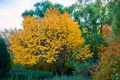 Τα δέντρα με τα χρυσά και πράσινα φύλλα στοκ φωτογραφίες με δικαίωμα ελεύθερης χρήσης
