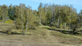 Τα δέντρα μια ημέρα άνοιξη ταλαντεύονται υπαίθρια με ένα αεράκι φιλμ μικρού μήκους