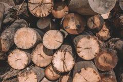 Τα δέντρα περικοπών κινηματογραφήσεων σε πρώτο πλάνο, καμπίνες κούτσουρων, κούτσουρα βρίσκονται μια δέσμη στοκ εικόνα