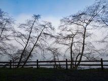 Τα δέντρα σε αυτήν την χειμερινή σκηνή αντιπαραβάλλουν αισθητά ενάντια σε μια τράπεζα και έναν μπλε ουρανό ομίχλης Στοκ εικόνα με δικαίωμα ελεύθερης χρήσης