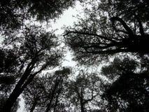 Τα δέντρα συναντιούνται κρυφά στοκ εικόνα με δικαίωμα ελεύθερης χρήσης