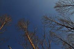 Τα δέντρα 01 Στοκ Εικόνες