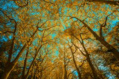 Τα δέντρα Autunm στο πάρκο, τελειοποιούν το τοπίο πτώσης Στοκ εικόνα με δικαίωμα ελεύθερης χρήσης