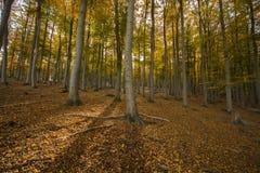 τα δασικά ξύλα flovers αγάπης χορταριών φθινοπώρου δέντρων ηλιοφάνειας φωτός του ήλιου φύσης βγάζουν φύλλα το γήινο τοπίο στοκ φωτογραφίες με δικαίωμα ελεύθερης χρήσης