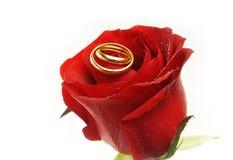 τα δαχτυλίδια αυξήθηκαν γάμος στοκ φωτογραφίες με δικαίωμα ελεύθερης χρήσης
