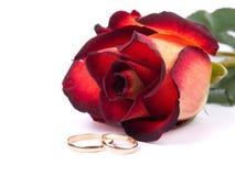 τα δαχτυλίδια αυξήθηκαν &g Στοκ φωτογραφία με δικαίωμα ελεύθερης χρήσης