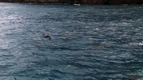 Τα δελφίνια κολυμπούν το υποβρύχιο κοντινό σκάφος στο Ειρηνικό Ωκεανό απόθεμα βίντεο