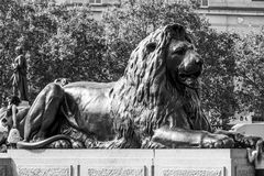 Τα διάσημα λιοντάρια στη πλατεία Τραφάλγκαρ στο Λονδίνο - το ΛΟΝΔΙΝΟ - τη ΜΕΓΑΛΗ ΒΡΕΤΑΝΊΑ - 19 Σεπτεμβρίου 2016 Στοκ φωτογραφία με δικαίωμα ελεύθερης χρήσης