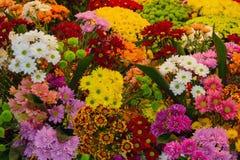 Τα διάφορα ζωηρόχρωμα λουλούδια είναι πώληση σε ένα ανθοπωλείο Στοκ Εικόνα