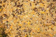 Τα διακοπμμένα κομμάτια του χρώματος που βρίσκονται στην επιφάνεια σε έναν φανταχτερό βρωμίζουν Στοκ Εικόνες