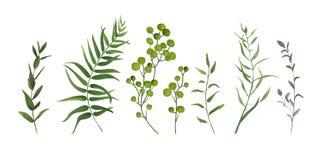 Τα διανυσματικά στοιχεία σχεδιαστών καθορισμένα τη συλλογή της πράσινης δασικής φτέρης, TR διανυσματική απεικόνιση