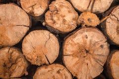 Τα διασπασμένα δέντρα είναι στην αποθήκη εμπορευμάτων για την περαιτέρω επεξεργασία Στοκ Εικόνα