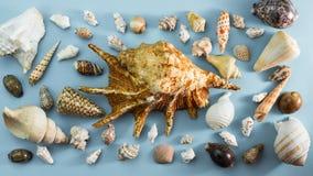 Τα διαφορετικά κοχύλια θάλασσας εμβλημάτων στο γκρίζο επίπεδο άποψης υποβάθρου τοπ βρέθηκαν στοκ φωτογραφία με δικαίωμα ελεύθερης χρήσης