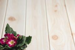 Τα δοχεία λουλουδιών κινηματογραφήσεων σε πρώτο πλάνο στο ξύλινο γραφείο και το χρώμα κρέμας wallpape Στοκ Εικόνες