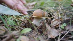 Τα δώρα του φθινοπώρου boletus edulis δασικός s σκίουρος ψωμιού φιλμ μικρού μήκους