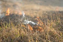 Τα εγκαύματα ξεραίνουν την πυρκαγιά ξηρού χόρτου Στοκ φωτογραφία με δικαίωμα ελεύθερης χρήσης
