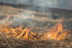 Τα εγκαύματα ξεραίνουν την πυρκαγιά ξηρού χόρτου Στοκ Εικόνες