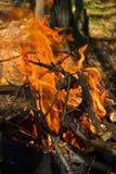 Τα εγκαύματα πυρκαγιάς στα ξύλα στοκ φωτογραφίες με δικαίωμα ελεύθερης χρήσης