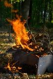 Τα εγκαύματα πυρκαγιάς στα ξύλα στοκ φωτογραφία