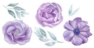 Τα εκλεκτής ποιότητας ρόδινα και πορφυρά λουλούδια watercolour θέτουν Αυξήθηκε και άνθος anemone χαιρετισμός, πρόσκληση, γάμος, κ διανυσματική απεικόνιση