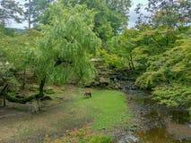 Τα ελάφια του Νάρα περιπλανώνται ελεύθερο στο πάρκο του Νάρα Στοκ Εικόνες