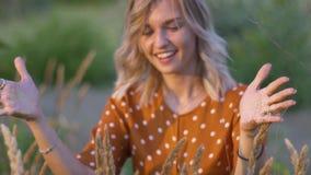 Τα ελκυστικά νέα χέρια γυναικών με χρυσό ακτινοβολούν στον τομέα στο ηλιοβασίλεμα κίνηση αργή φιλμ μικρού μήκους