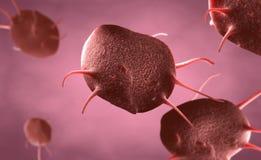 Τα ενεργοποιημένα αιμοπετάλια, κάλεσαν επίσης thrombocytes αρμόδιος για τη θεραπεία και την περάτωση των πληγών ελεύθερη απεικόνιση δικαιώματος