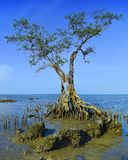 Τα εξωτικά δέντρο-5 στοκ φωτογραφίες