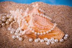 τα εξωτικά μαργαριτάρια στρώνουν με άμμο το κοχύλι στοκ φωτογραφίες