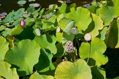 τα επικεφαλής φυτά ακρών π&l Στοκ εικόνες με δικαίωμα ελεύθερης χρήσης
