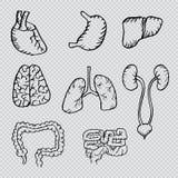 Τα εσωτερικά ανθρώπινα όργανα δίνουν τα συρμένα εικονίδια καθορισμένα Στοκ Φωτογραφίες