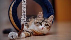 Τα εσωτερικά πολύχρωμα παιχνίδια γατακιών Στοκ φωτογραφίες με δικαίωμα ελεύθερης χρήσης