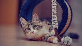 Τα εσωτερικά πολύχρωμα παιχνίδια γατακιών Στοκ εικόνα με δικαίωμα ελεύθερης χρήσης