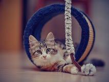 Τα εσωτερικά πολύχρωμα παιχνίδια γατακιών Στοκ φωτογραφία με δικαίωμα ελεύθερης χρήσης