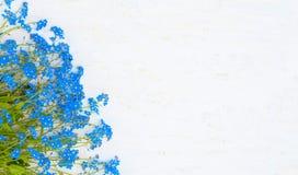 Τα ευγενή σύνορα του μπλε με ξεχνούν όχι λουλούδια στο άσπρο υπόβαθρο Στοκ φωτογραφίες με δικαίωμα ελεύθερης χρήσης