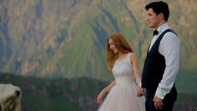 Τα εύθυμα newlyweds σε ένα υπόβαθρο των όμορφων βουνών, στο υπόβαθρο μια αγελάδα περνούν απόθεμα βίντεο