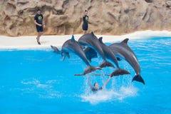 Τα δελφίνια άλματος στο δελφίνι παρουσιάζουν στοκ εικόνες