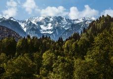 Τα ζαλίζοντας βουνά Άλπεων που περιβάλλονται από το βαυαρικό δάσος Στοκ Εικόνα