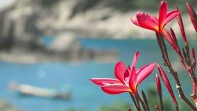 Τα ζωηρά κόκκινα λουλούδια plumeria ανθών μπροστά από τον ωκεάνιο κόλπο με κάποιο τεράστιο γρανίτη λικνίζουν και τη μακριά βάρκα  φιλμ μικρού μήκους