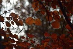 Τα ζωηρά φύλλα του φθινοπώρου στοκ φωτογραφίες με δικαίωμα ελεύθερης χρήσης