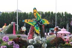 Τα ζωηρόχρωμα λουλούδια και μια πολύ όμορφη άποψη της πεταλούδας στο θαύμα καλλιεργούν, Ντουμπάι Στοκ Εικόνα