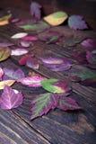 Τα ζωηρόχρωμα πεσμένα φύλλα φθινοπώρου βρίσκονται στους τραχιούς πίνακες Στοκ Φωτογραφίες